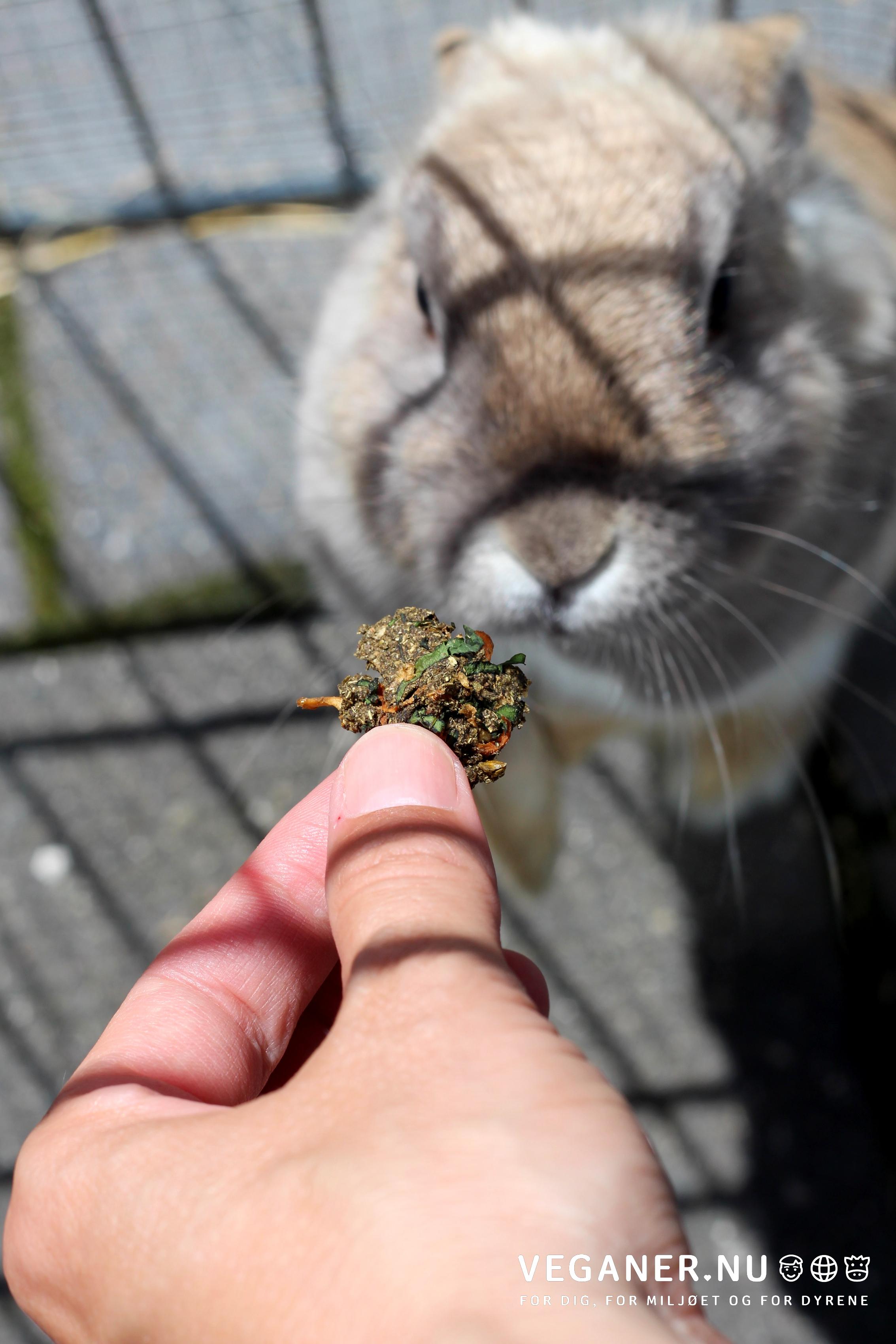 Veganer.nu-kaningodbid-kaninsnack