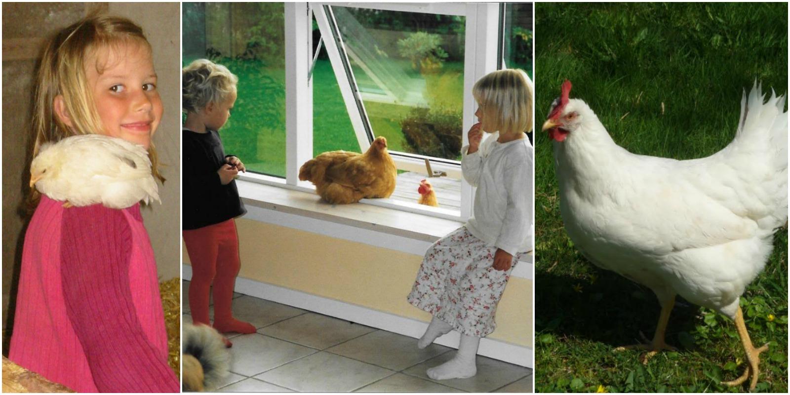 Børn og høns
